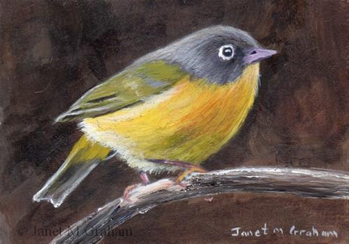 """""""Nashville Warbler ACEO"""" original fine art by Janet Graham"""