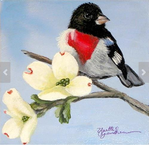 """Hiding in The Dogwood Rose-breasted Grosbeak and Dogwood"" original fine art by Yvette Gaudreau"