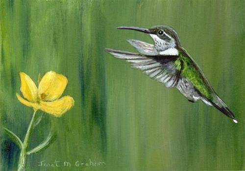 """Hummingbird ACEO"" original fine art by Janet Graham"
