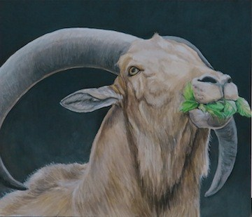 """Auodad Sheep"" original fine art by Charlotte Yealey"