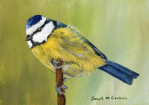 """Blue Tit ACEO"" original fine art by Janet Graham"
