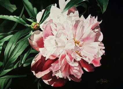 """Pink Peony"" original fine art by Jacqueline Gnott, whs"