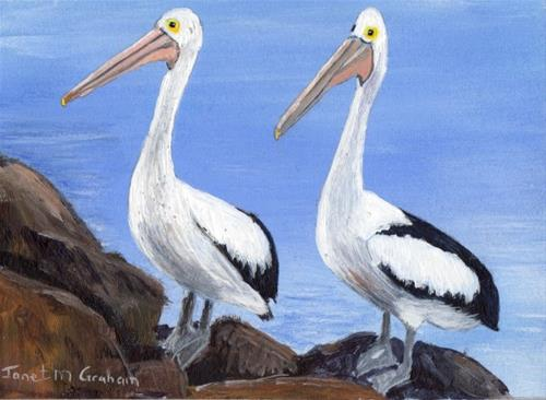 """Pelicans ACEO"" original fine art by Janet Graham"