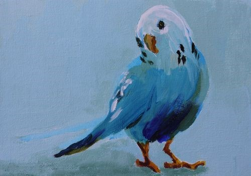 """Budgie, Contemporary Animal Portraits by Amy Whitehouse"" original fine art by Amy Whitehouse"
