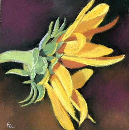 sunflower art challenge original fine art by Ria Hills