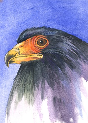 """Wildlife Painting, Bird Nature, African Eagle The Art of Nature, Fine Art by Mindy Lighthipe"" original fine art by Mindy Lighthipe"