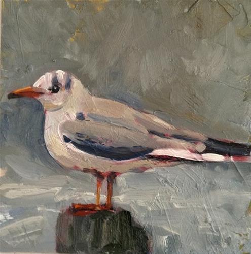 """Gray Gull"" original fine art by Deborah Newman"