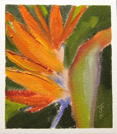 """Bird of Paradise"" original fine art by Jane Frederick"