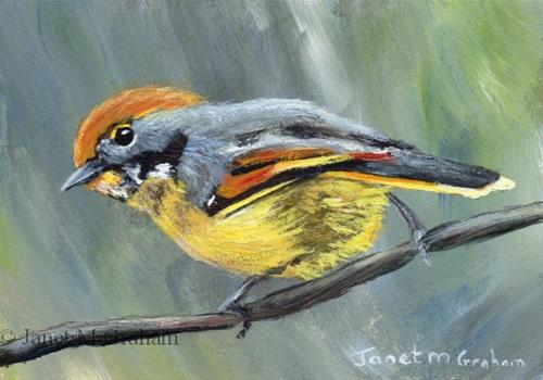"""Bar Throated Minla ACEO"" original fine art by Janet Graham"
