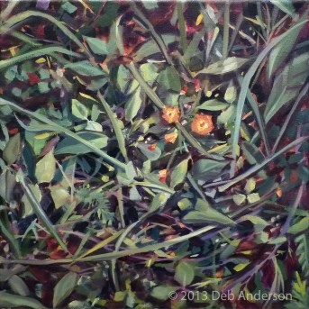 """Oil painting: Hawkweed"" original fine art by Deb Anderson"