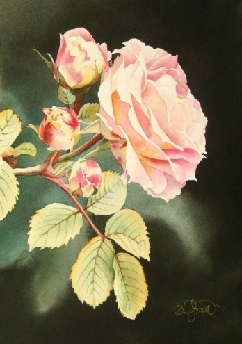 """Soft Pink Rose"" original fine art by Jacqueline Gnott, whs"