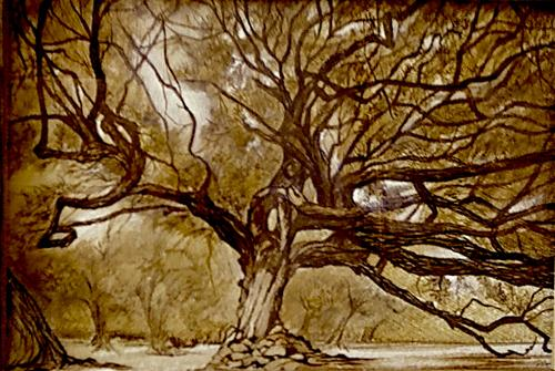 """Live Oak"" original fine art by Patti Adams"