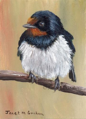 """Barn Swallow ACEO"" original fine art by Janet Graham"