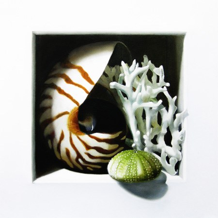 """Nautilus, Coral and Urchin 8x8"" original fine art by M Collier"