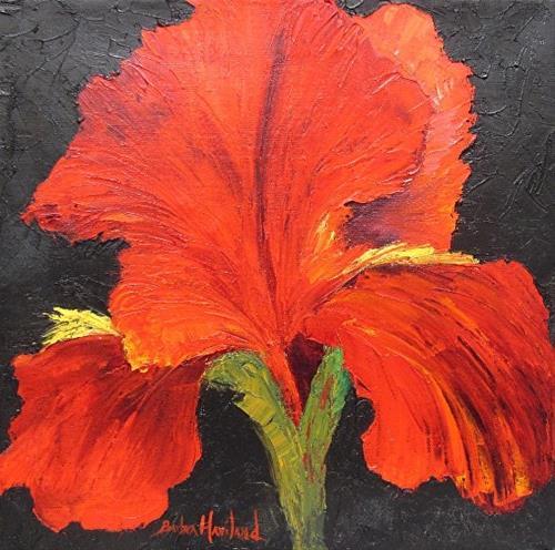 """A Big Red Iris Flower,flora,fine art,Barbara Haviland Texas Contemporary Artist"" original fine art by Barbara Haviland"