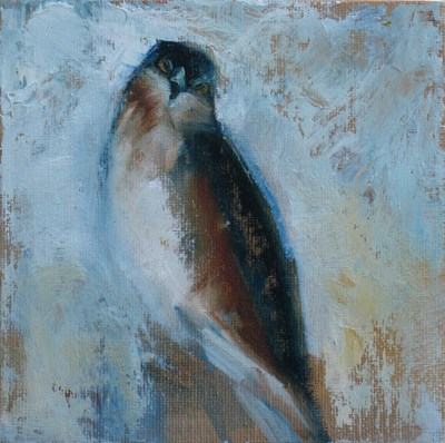 """Little Hawk"" original fine art by Susan Hammer"