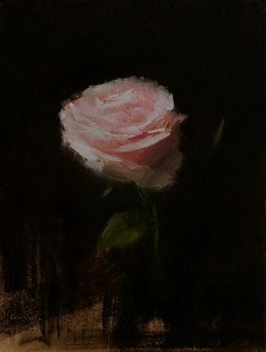 """""""Rose"""" original fine art by Neil Carroll"""