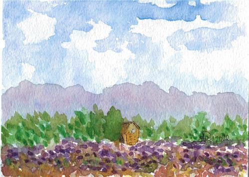 """Lavendar Field"" original fine art by Donna Vieth"