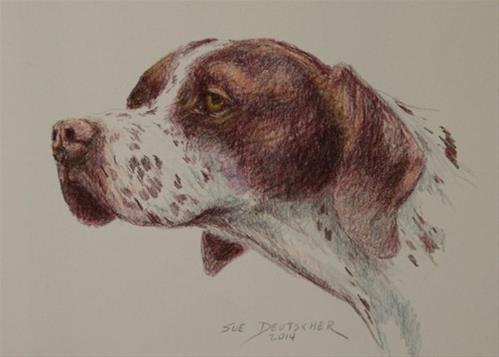 """""""English Pointer 5x7 colored pencil"""" original fine art by Sue Deutscher"""