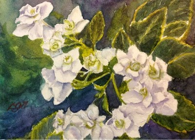 """Day 8 - White Hydrangeas"" original fine art by Lyn Gill"