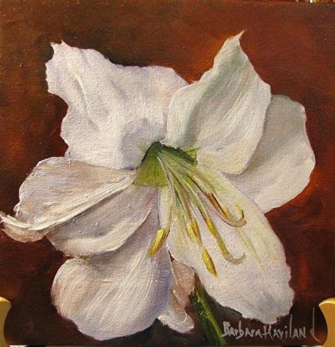 """White Amaryllis"" original fine art by Barbara Haviland"