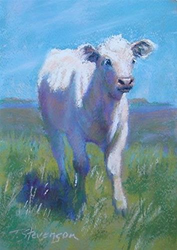 """White Calf"" original fine art by Trish Stevenson"