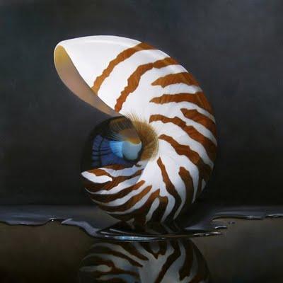 """Nautilus 12x12"" original fine art by M Collier"