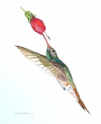"""Buff-Bellied Hummingbird at Turk's Cap Flower"" original fine art by Laurie Maher"