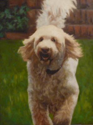 """""""Golden Doodle"""" original fine art by Jonelle Summerfield"""