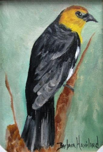 """Yellow Hooded Blackbird by Barbara Haviland"" original fine art by Barbara Haviland"