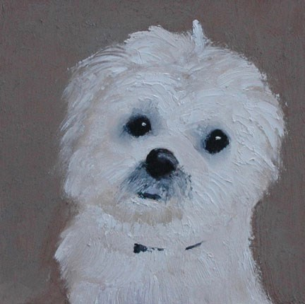 """COOPER"" original fine art by Linda Popple"
