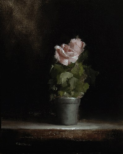 """Rose Plant"" original fine art by Neil Carroll"
