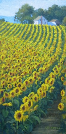 """'Sunflower Hill' An Original Oil Painting by Claire Beadon Carnell"" original fine art by Claire Beadon Carnell"