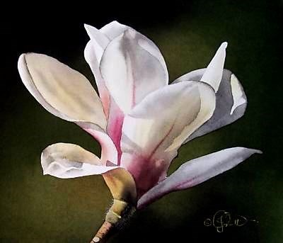 """Sunset Magnolia"" original fine art by Jacqueline Gnott, whs"