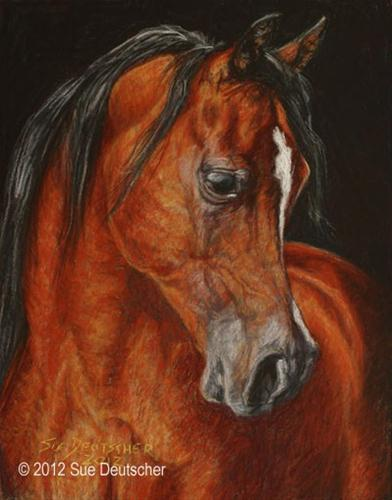 """Arabian Stallion - El Thay Moufeed"" original fine art by Sue Deutscher"