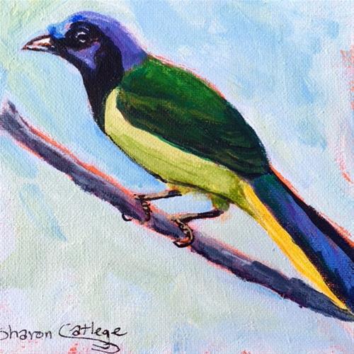 """Green Jay"" original fine art by Sharon Catlege"