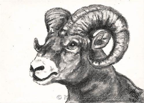 """Charcoal Big Horn Sheep"" original fine art by Kim Loberg"
