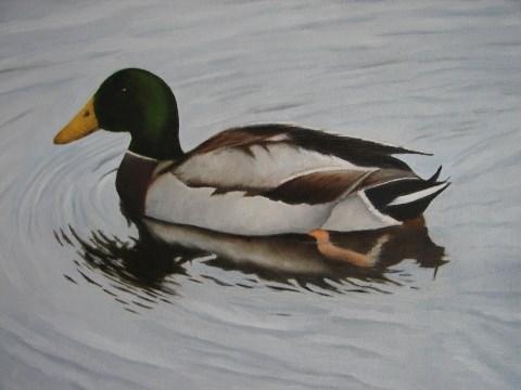 """Mallard Duck"" original fine art by Kirk Kerndl"