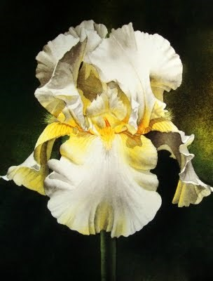 """Yellow & White Iris"" original fine art by Jacqueline Gnott, TWSA, WHS"