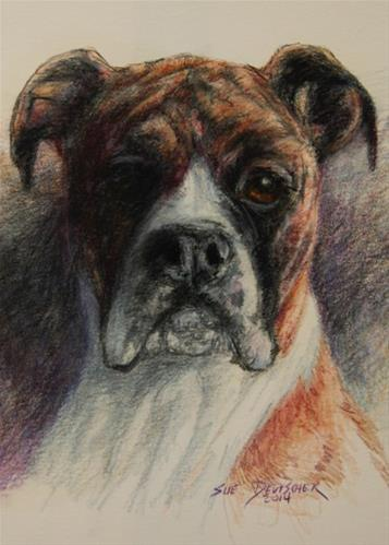 """Boxer"" original fine art by Sue Deutscher"