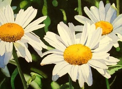 """""""White Daisys"""" original fine art by Jacqueline Gnott, whs"""