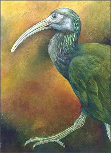 """Wildlife Painting, Bird Nature, Green Ibis The Art of Nature, Fine Art by Mindy Lighthipe"" original fine art by Mindy Lighthipe"