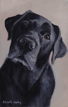 """Black Lab"" original fine art by Charlotte Yealey"