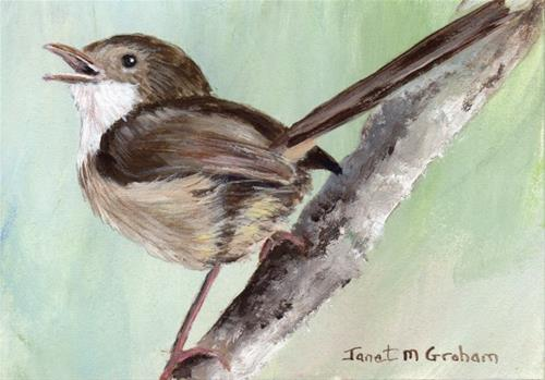 """Red Backed Fairy Wren (female) ACEO"" original fine art by Janet Graham"