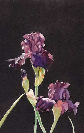 """Iris"" original fine art by Charlotte Yealey"