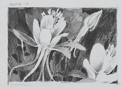 """Columbine__colorado, flower, sketch"" original fine art by V.... Vaughan"