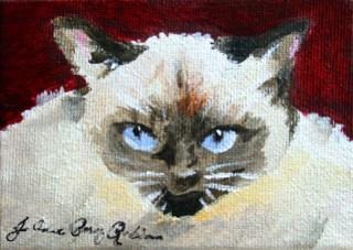 """Serious Cat"" original fine art by JoAnne Perez Robinson"