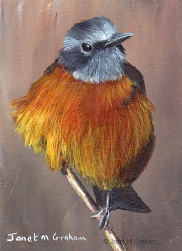 """Cape Rock Thrush ACEO"" original fine art by Janet Graham"