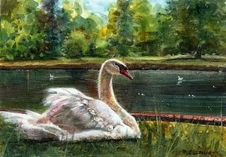 """""""Watercolor: Mute Swan"""" original fine art by Belinda Del Pesco"""