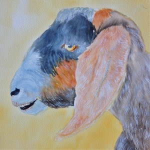 """Sept 20: Harry the Goat"" original fine art by Dana Richards"